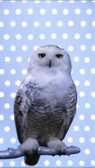 Eine weiße Eule blick den Betrachter frontal an. Der Hintergrund ist Hellblau unterlegt und weiß gepunktet.