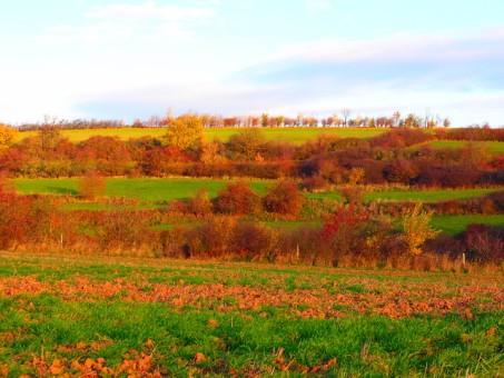 Ackerterrassen bei Glehn im Herbst.
