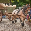 Auf dem Foto ist ein mit Säcken beladener Karren zu sehen, vor welchen ein Pferd gespannt ist. Das Pferd zieht den Karren über einen gepflasterten Weg. Am Wegrand stehen Leute, welche das Geschehen mitverfolgen.