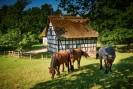 Drei Pferde auf einer Weide, im Hintergrund ein schwarz-weißes  Fachwerkhaus mit Strohdach.